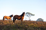 Two Horses Standing on Heathland
