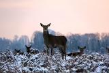 Deers in Bushi Park