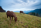Two Draft Horses Feeding in Front of Bavarian Alps