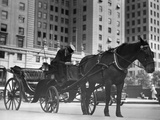 Horse Drawn Carriage  NYC