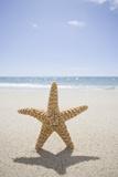 Usa, Massachusetts, Cape Cod, Nantucket, close up of Starfish on Sand Papier Photo par Chris Hackett