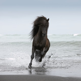 Stallion Running on Beach