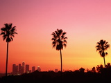 Usa  California  Los Angeles  Skyline and Palm Trees at Sunset
