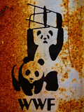 Panda Bear Wrestling
