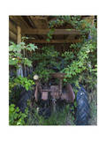 Rusted Tractor with Vines (Chapel Hill  NC)