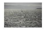 San Francisco Bay 2 (Wind Surfer)