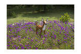 Fawn Garden Statue (Purple Flowers  Durham  NC)