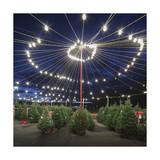 Christmas Trees for Sale 2 (Holiday Lights)
