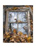 Window Frame and Autumn Leaves (Still Life  North Carolina)