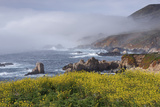 Mustard and Fog at Sobranes Point