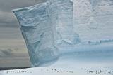 Chinstrap Penguinson Iceberg