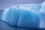 Antarctica  Weddell Sea  Chinstrap Penguins Resting on Blue Iceberg