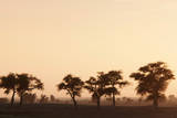 Countryside at Dusk near to Djenne  Mali