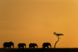 Herd of Elephants and Vultures at Sunrise