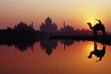 Taj Mahal & Silhouetted Camel & Reflection in Yamuna River at Sunset