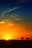 Silhouette of Camels at Sunset Saudi Arabia