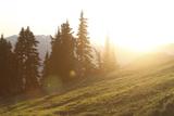 Sun Washed Mountain Meadow