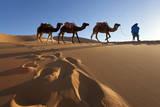 Tuareg Man Camels & Dunes  Sahara Desert  Morocco