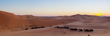 Sunset over Tents & Camels in the Sahara Desert