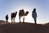 Tuareg Man with Camel Train  Sahara Desert  Morocc