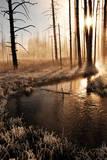 Frosty Yellowstone Morning
