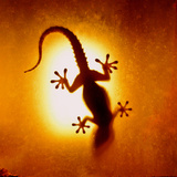 Artistic Backlight Shot of a Gecko  Nicely Shaped