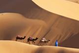 Camels & Dunes  Erg Chebbi  Sahara Desert  Morocco