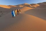 Tuareg Camel Train  Sahara Desert  Morocco