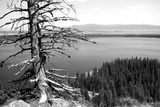 Usa  Wyoming  Grand Teton Np  Jenny Lake  Dead Tree (B&W)