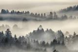 Morning Mist above Kochelmoor