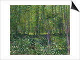 Trees and Undergrowth  c1887