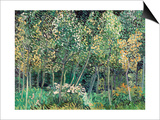 Small forest  July 1890