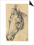 Study of the Head of a Horse  Pen Drawing on Paper Turned Yellow  Royal Library  Windsor