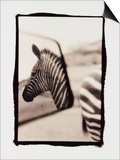 Zebra in the Mirror 1