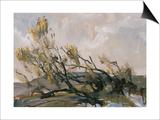 Spring Wind Breeds Life
