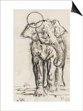 Etude d'éléphant