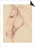 Tête de cheval bridée  tournée vers la gauche