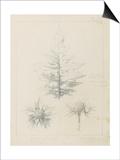 Etude de feuilles de echirops  de sphoerophalus  chardon cultivé  de chardon sauvage de la mer  de