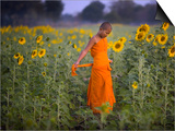 Novice Buddhist Monk Makes His Way Through a Field of Sunflowers as 10 000 Gather  Thailand