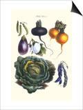Vegetables; Eggplant  Beans  Cabbage  Turnips