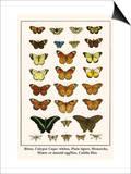 Blues  Calypso Caper Whites  Plain Tigers  Monarchs  Mimic or Danaid Eggflies  Caddis Flies