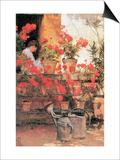 Red Geraniums