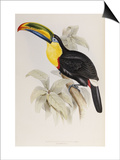 A Monograph of the Ramphastidae or Family of Toucans  1834