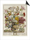 Hand Colored Engraving of Bouquet- October  1730