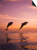 Jumping Bottlenose Dolphins