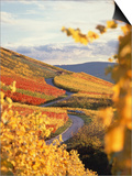 Vineyards in autumn in Esslingen/Neckar