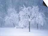 Landscape with bench in winter