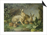Hares and Leverets in a Rocky Lair