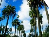 Palm Trees Lining Street