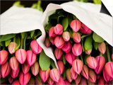 Pink Tulips Wrapped in Paper